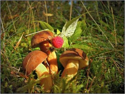 Факторы, влияющие на рост и плодоношение грибов