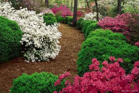 Где же лучше разместить декоративные кустарники в саду?