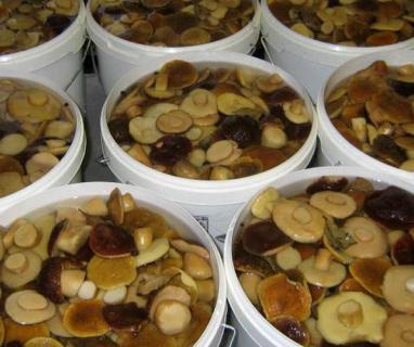 Вымачивание и соление грибов