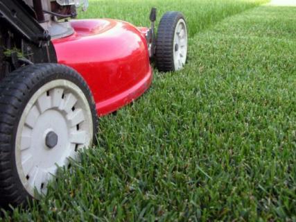 Когда лучше сажать и сеять газонную траву?