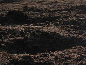 Как лучше всего оздоровить истощенную землю?