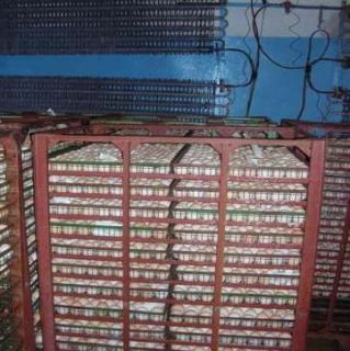 Проблемы с инкубацией яиц