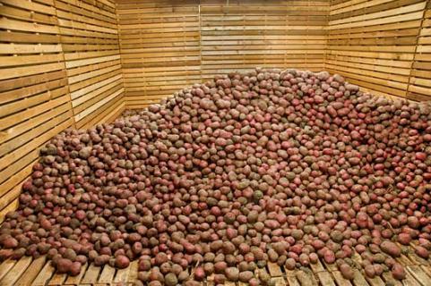 Необычный способ хранения картофеля