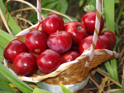 Как определить спелость яблок с помощью йода