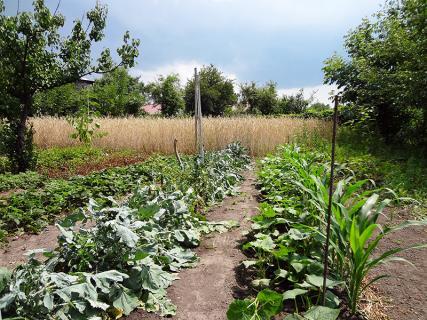 Советы по уходу за овощами в июне