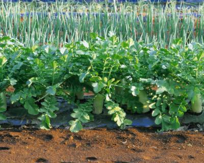 Как защищают растения в июне