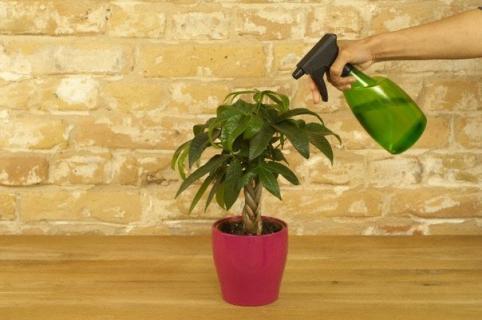 дегтярного мыла для защиты растений