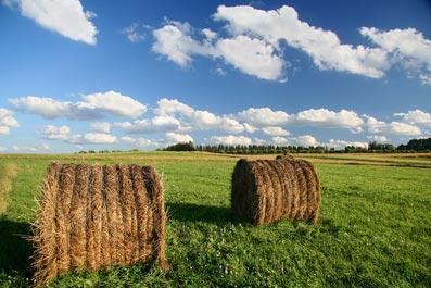 Чем сенаж отличается от сена?