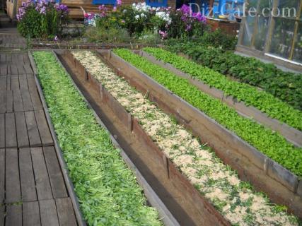Выращиванием овощей по Миттлайдеру