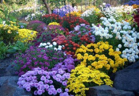 Размножение цветов в саду