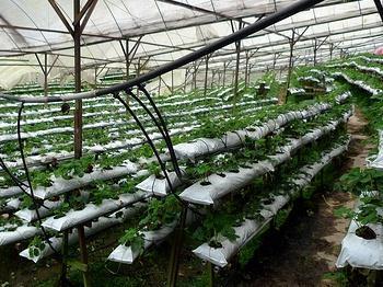 Выращивание овощей в закрытом грунте