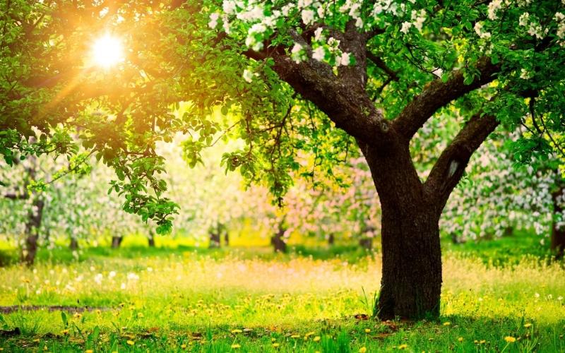 Классификация плодовых деревьев