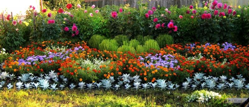 Особенности посева однолетних и многолетних цветов