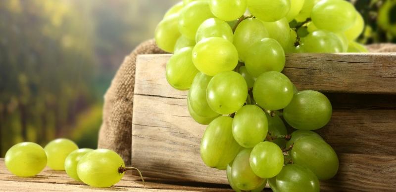 Виноград средних сроков созревания