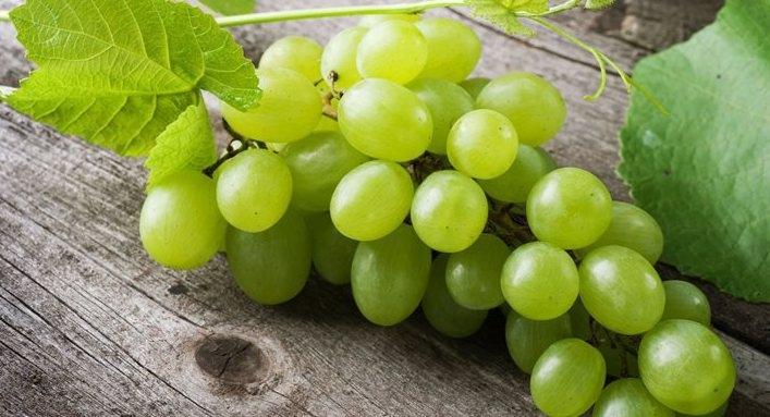 Ранние сорта винограда описание