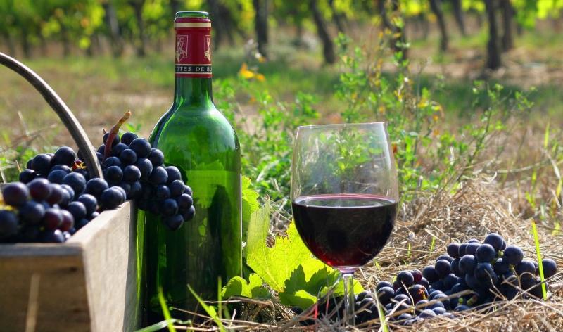 Выращивание винограда во Франции