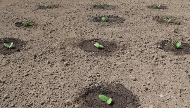 Какая огурцам нужна почва?