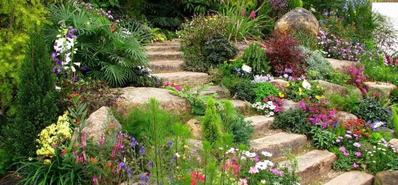 Многолетние растения: красивый цветущий сад из года в год