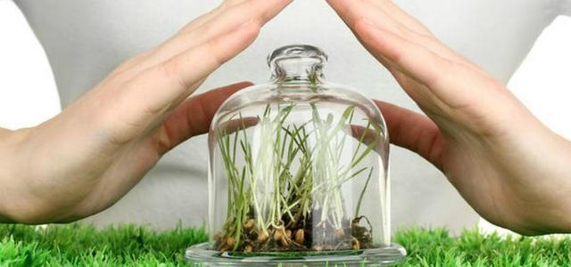 Дополнительная защита семян с помощью протравителей