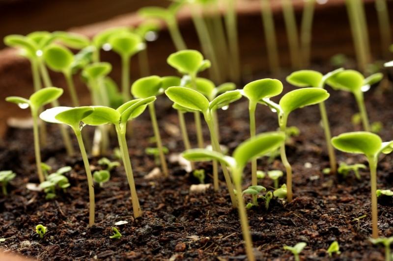 Как выбрать протравители семян