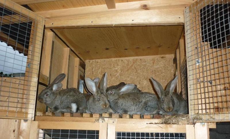 Как сделать клетки для кроликов своими руками