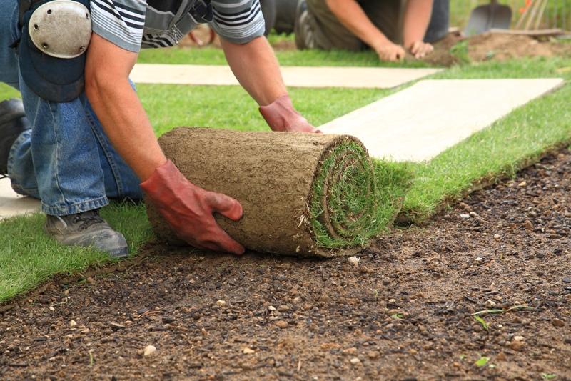 Рулонный газон: преимущества, расчет количества, укладка и уход на даче