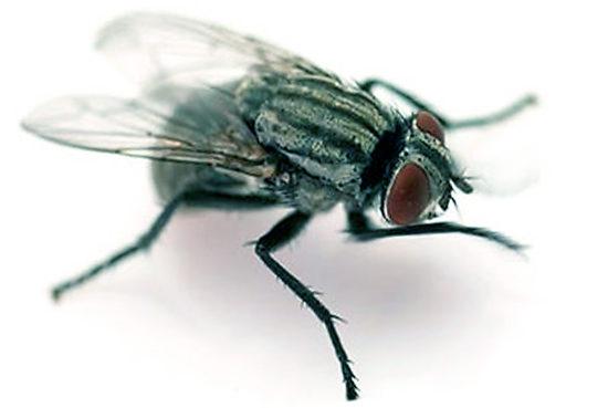 Как избавляемся от мух в доме советы