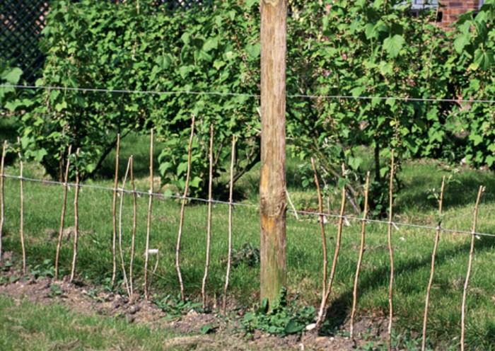 Как посадить малину правильно?